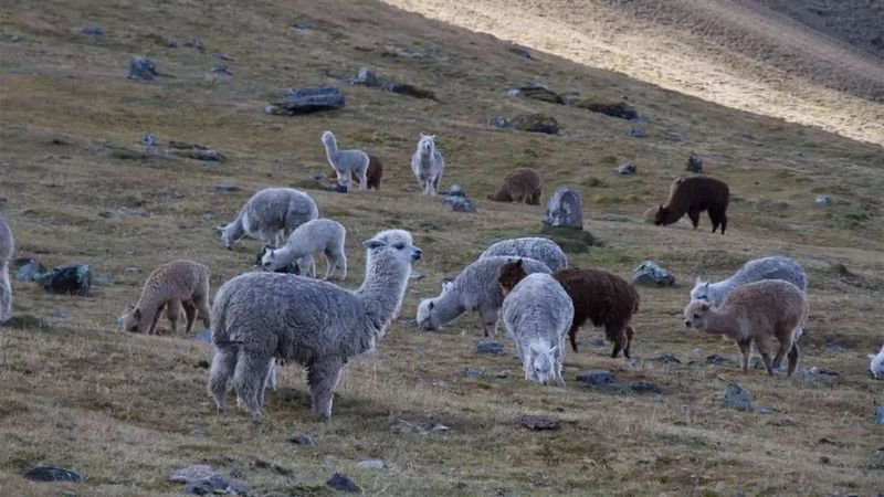 DeFi羊毛没薅着,你可能还搭上了自己的羊